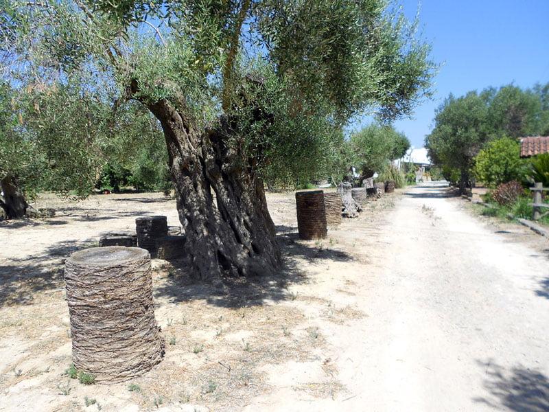 Agricampeggio Agrimat di Gallipoli (LE)